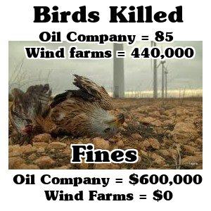 oilbirds.jpg