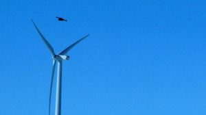 Wind Energy Eagle Deaths