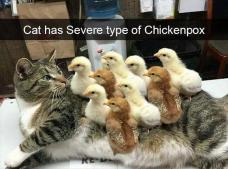 funny-animal-pics-1-1