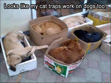 funny-animal-pics-9-1