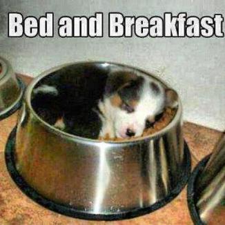 bed n breakfast