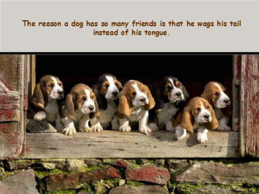 dog wags his tail
